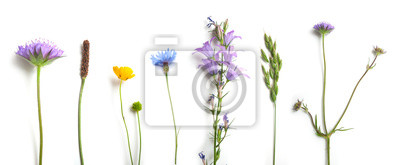Papiers peints closeup of wild grass and flowers on white background