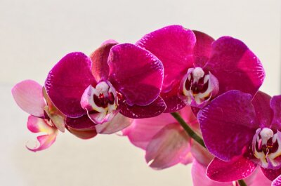 Papiers peints Closeup orchidée violette