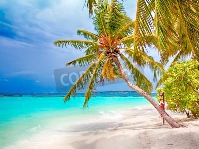 Papiers peints Coconut Palm Beach