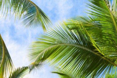 Papiers peints Coconut, paume, arbre, feuilles