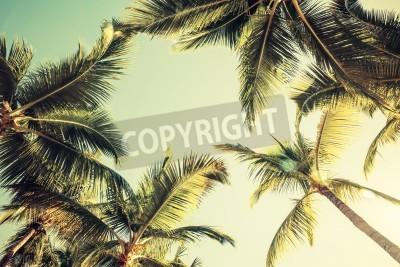 Papiers peints Cocotiers sur ciel fond lumineux. Style vintage. Photo teintée avec effet de filtre