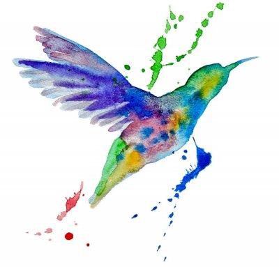 Papiers peints colibri multicolore sur fond blanc