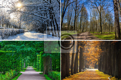 Papiers peints Collage seasons . All season. Seasons in one photo. Winter spring summer autumn. Tree branch. Grass with dew. Nature.