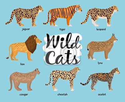 Papiers peints Collection de chats sauvages