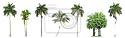 Papiers peints Collection de palmiers isolé sur fond blanc