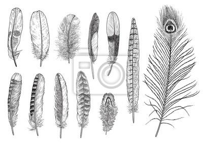 Papiers Peints Collection De Plumes Illustration Dessin Gravure Encre Ligne