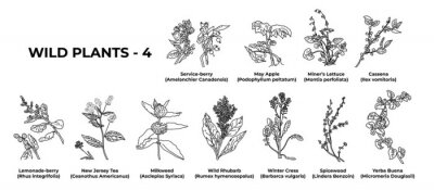 Papiers peints Collection of healing herbs and plants hand-drawn
