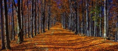 Papiers peints Coloré, automne, Arbres