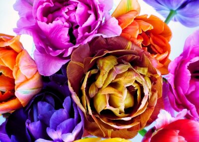 Papiers peints Colorful tulips in vintage style