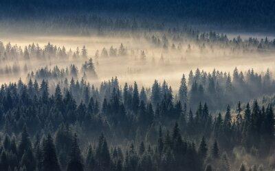 Papiers peints Conifère, forêt, brumeux, montagnes