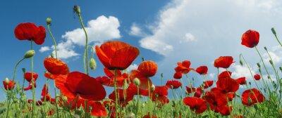 Papiers peints coquelicot rouge et les nuages
