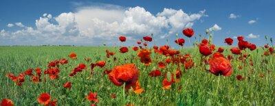 Papiers peints coquelicots rouges et le ciel avec des nuages
