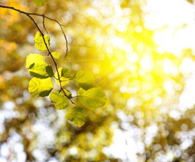 Coucher de soleil dans la for t dautomne papier peint for Papier peint a effet d optique
