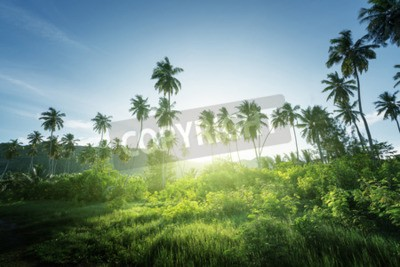 Papiers peints Coucher de soleil en jungle, seychelles