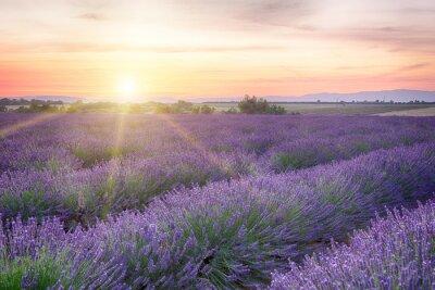 Papiers peints Coucher de soleil en Provence