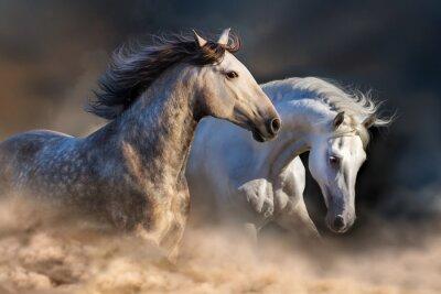 Papiers peints Couple, cheval, course, poussière, Coucher soleil, lumière