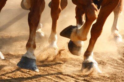 Papiers peints Coups de cheval