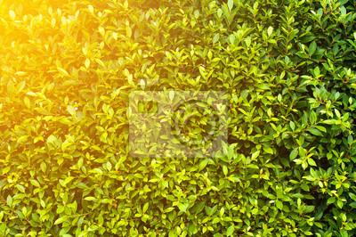 Couverture Verte Des Plantes Feuilles Vertes Fond Mur Papier Peint