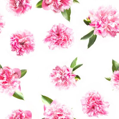 Papiers peints Creative seamless pattern of pink peony flower on white. Minimal flat lay. Top view.