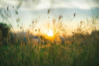 Papiers peints Crépuscule des herbes des prairies