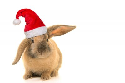 Cute brown young rabbit wearing santa's hat seen from the front isolated on a white background