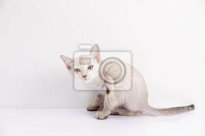 Cute chat sent isolé fond blanc, animal de compagnie drôle.