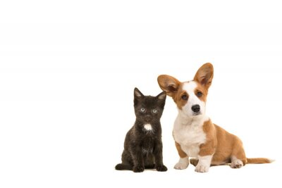 Cute puppy en cute kitten together looking at the camera isolated on a white background with space for copy