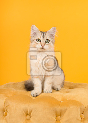 Cute siberian kitten sitting on a pouf looking at the camera on a yellow background in a vertical image