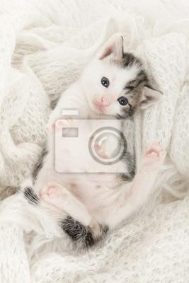 Cute Tabby et chat bébé blanc allongé sur le dos jouant sur un fond blanc de laine en image verticale