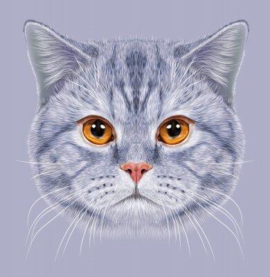 Papiers peints D'Illustrations - portrait, britannique, court, cheveux, cat. Chat tigré gris mignon Chat domestique avec des yeux d'orange.