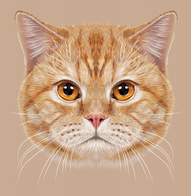 Papiers peints D'Illustrations - portrait, britannique, court, cheveux, cat. Mignon orange Chat domestique avec des yeux en cuivre.