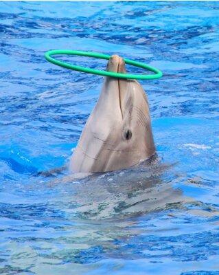 Papiers peints dauphin