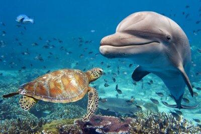Papiers peints Dauphin, tortue, sous-marin, récif