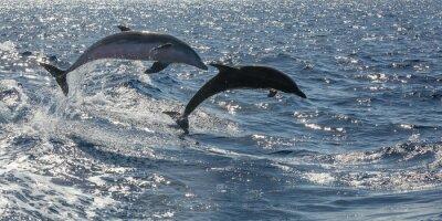 Papiers peints dauphins nageant librement hors Tenerife