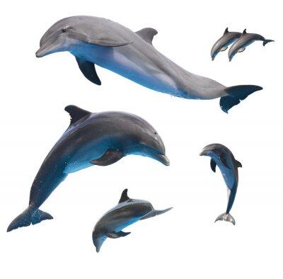 Papiers peints dauphins sautant sur blanc