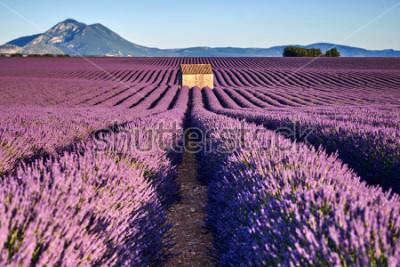 Papiers peints De beaux champs de lavande et une vieille maison en Provence