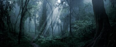 Papiers peints Deep tropical forest in darkness