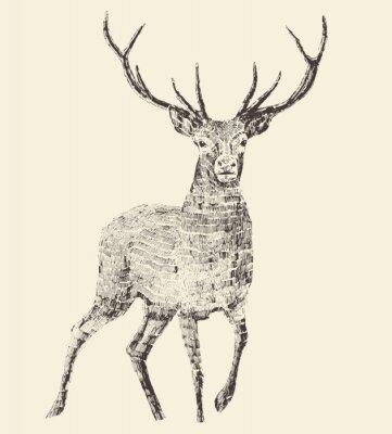 Papiers peints Deer, gravure, illustration vintage, Vector