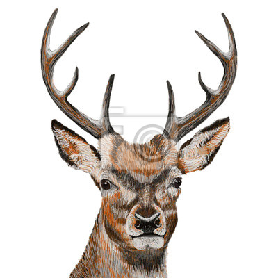 Deer head isolated on white background, vector