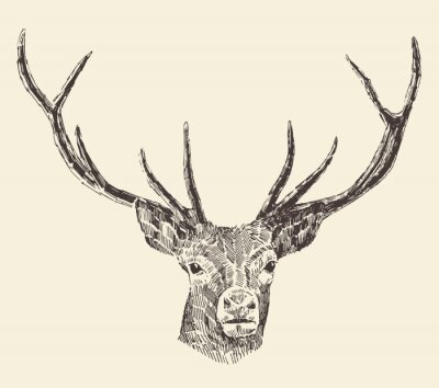 Papiers peints Deer Head Vintage Illustration, Hand Drawn, Vector
