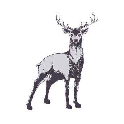 Papiers peints Deer isolated on white