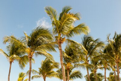 Papiers peints Des palmiers au fond d'une belle lumière du soleil