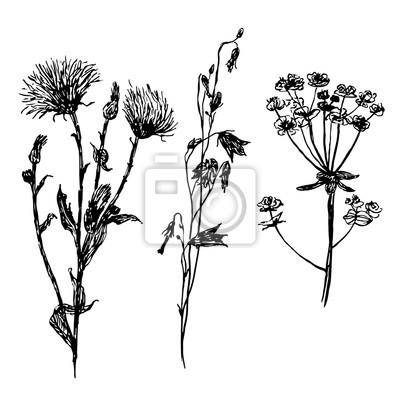 Papiers peints Dessin, ensemble, pré, champ, fleurs, dessiné à la main
