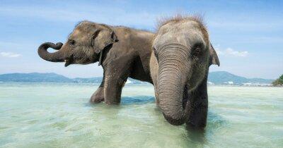 Papiers peints Deux bébé éléphant dans la mer. Edition de la bannière.