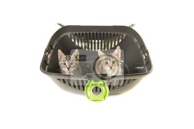 Deux chatons tabby dans un conteneur de transport en regardant la caméra