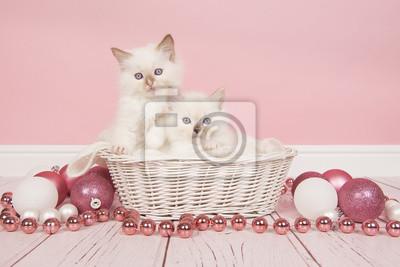 Deux chats ragdoll bébé dans un panier avec décoration de Noël rose