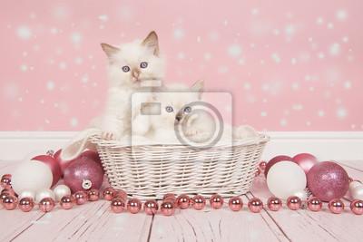 Deux chats ragdoll bébé dans un panier avec décoration de Noël rose et neige