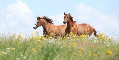 Papiers peints Deux chevaux de châtaigniers courir ensemble