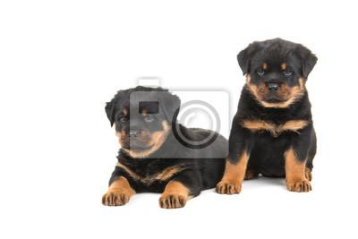 Deux chiots de rottweiler mignon, l'un assis l'un mensonge isolés à un fond blanc