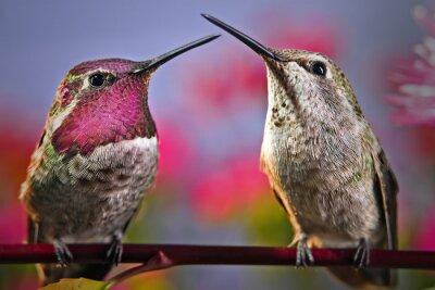 Papiers peints Deux colibris se tiennent côte à côte sur une brindille avec des fleurs dans l'arrière-plan.